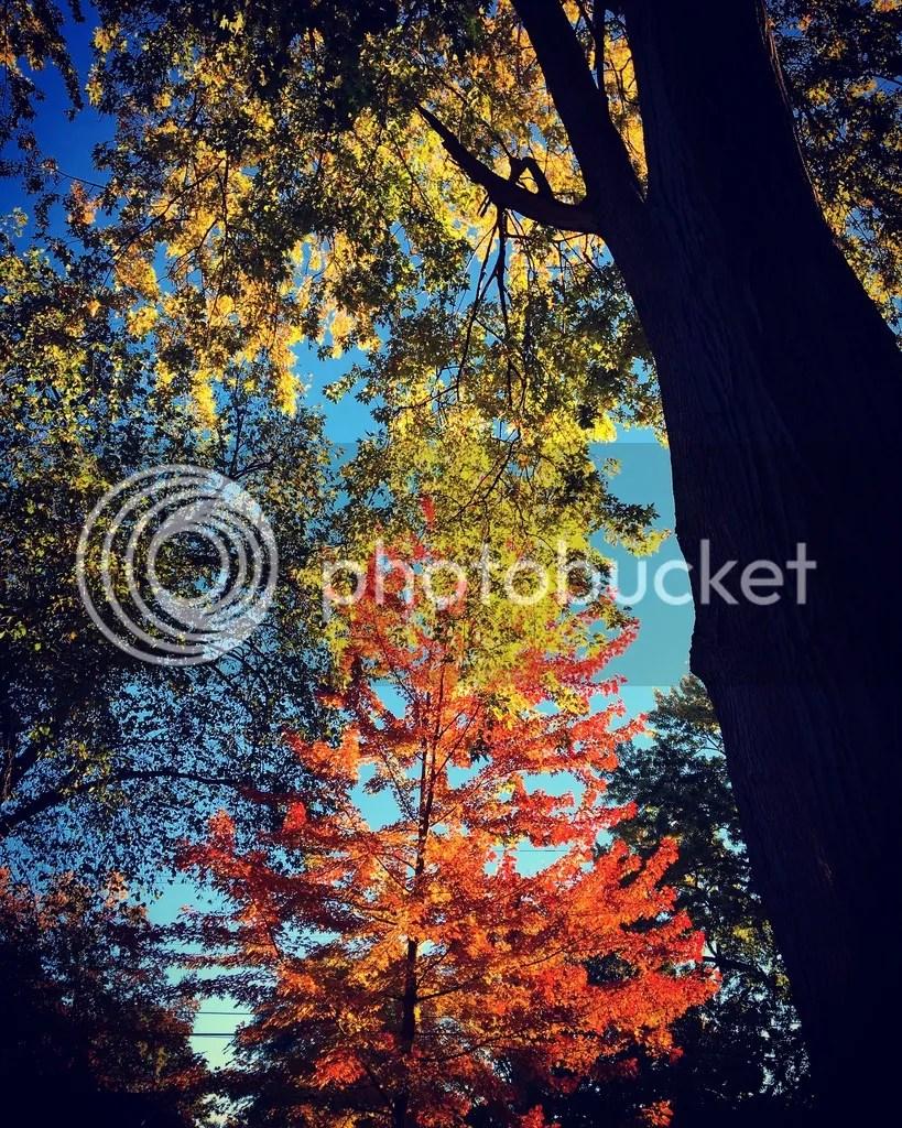 photo 8A220994-6DA3-4692-96B8-7C150148F43A_zpse0tdz2pe.jpg