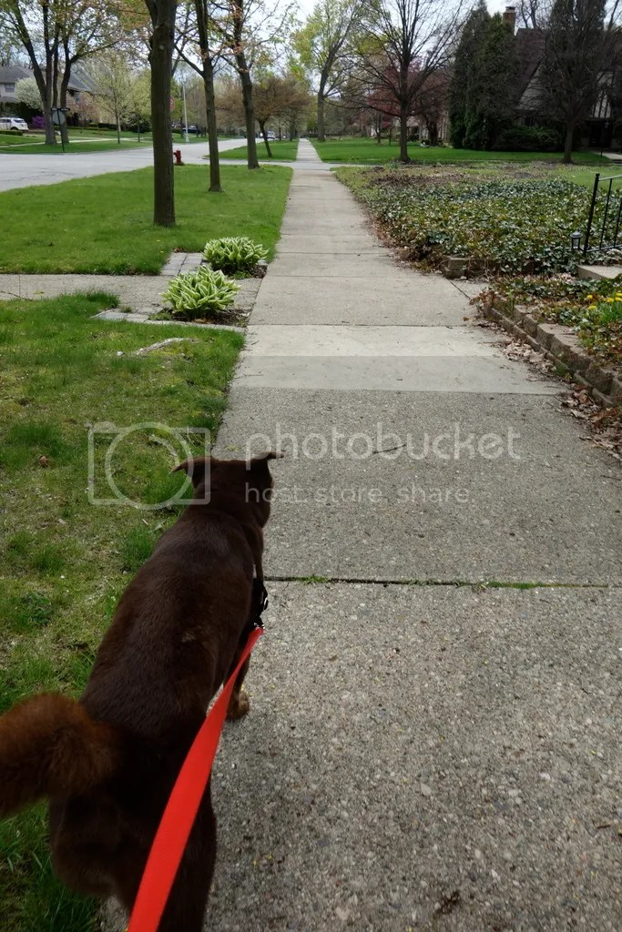 photo Puppy Walk_zpslnqeade5.jpg