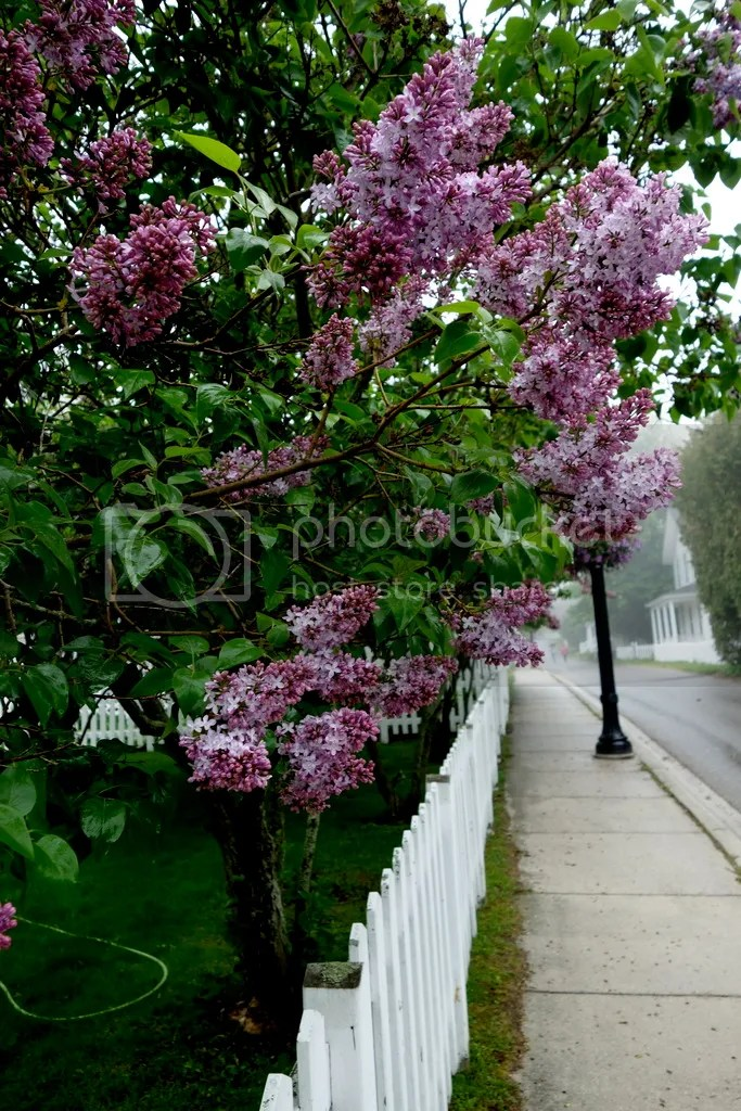 photo Lilac Festival Mackinac Island_zpslkxexmnh.jpg