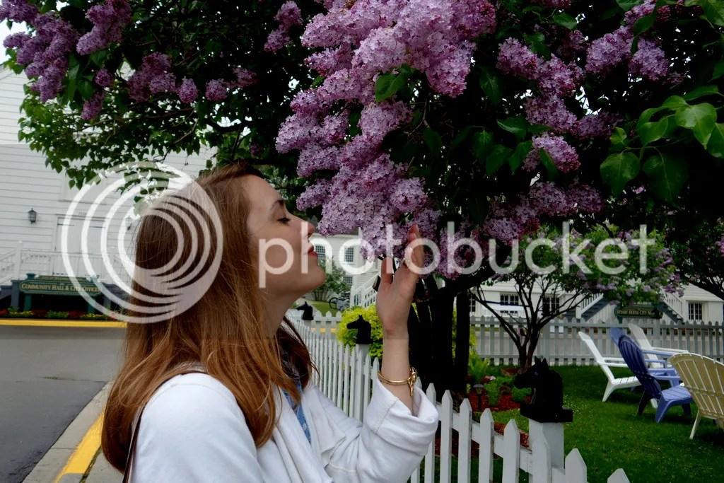 photo Lilac Tree Mackinac_zpsxgquf0qs.jpg