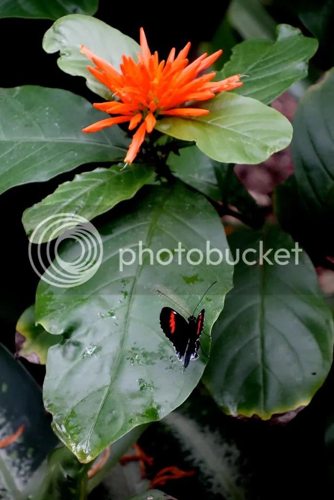 photo Meijer Gardens Butterfly House_zpsxwewufdt.jpg