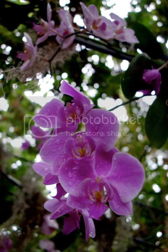 photo Meijer Gardens Flower_zpsdoxucszk.jpg