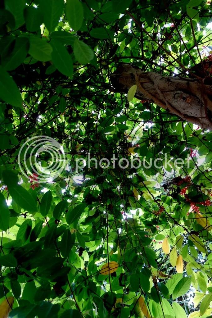 photo Tree Top Meijer Gardens_zpselythb9p.jpg