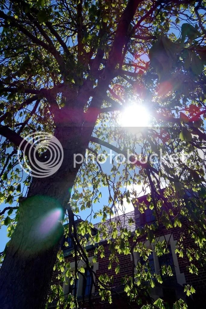 photo Springtime Sun_zpslqtm7kea.jpg