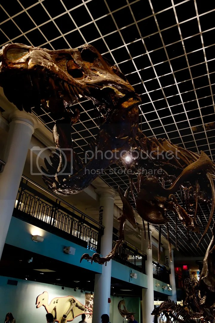 photo Museum of Natural Sciences TRex_zpsx98ibub3.jpg