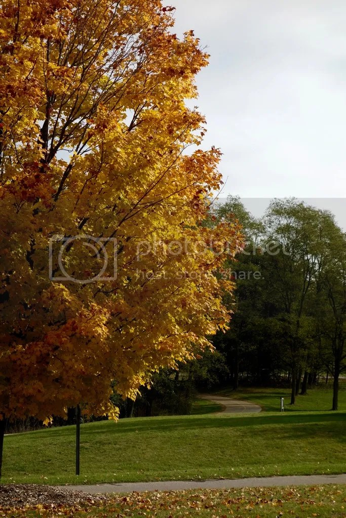 photo Stony Creek Park MI 5_zpsg1wjbdx9.jpg