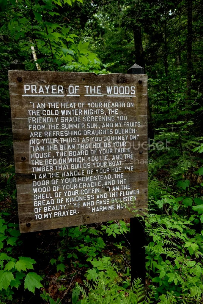 photo Prayer of the Woods_zpsct8drmqs.jpg