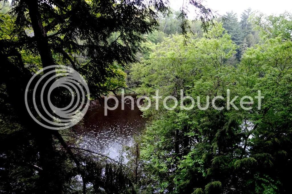 photo Tahquamenon River_zpssy4b7ltj.jpg
