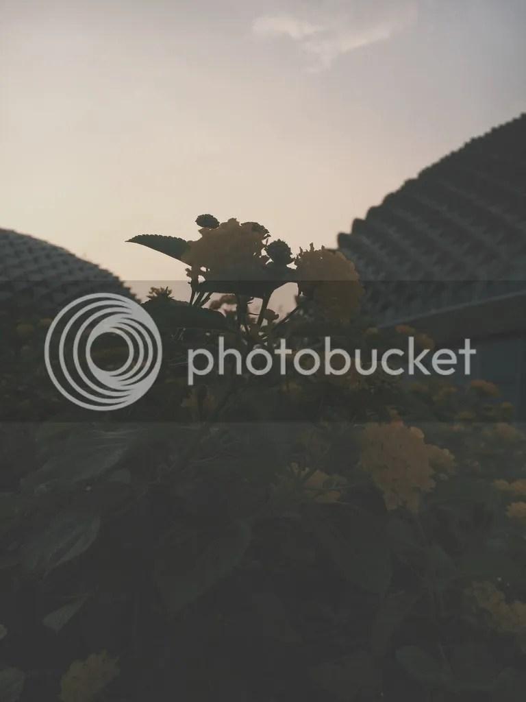 photo IMG_8776_zps6zkskwgr.jpg