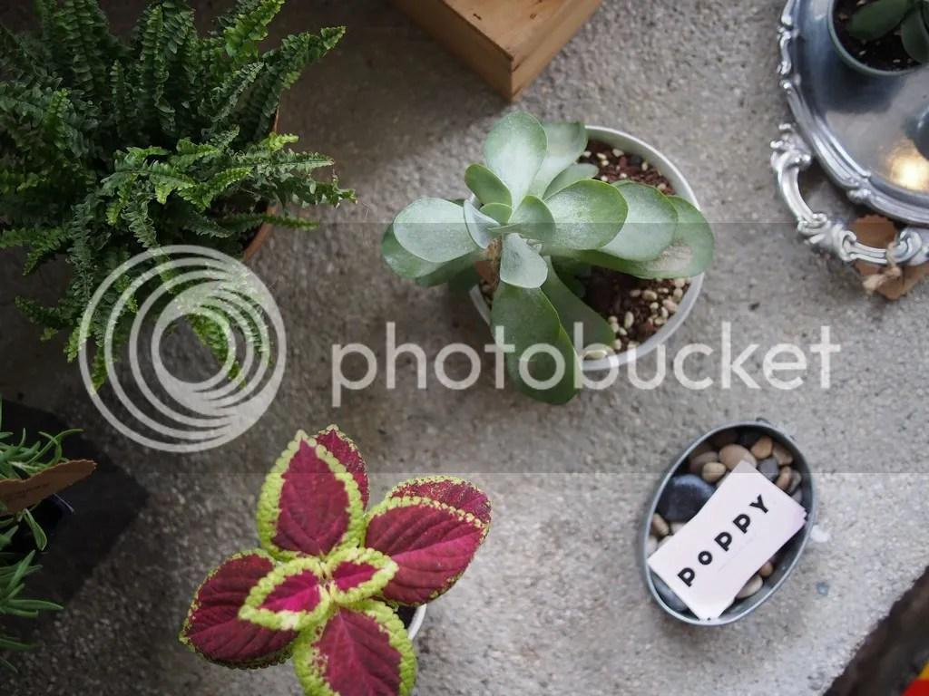 photo P1010055_zpsncyldrkq.jpg
