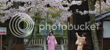 Viajar a Japón para ver los cerezos en flor: previsiones para 2017