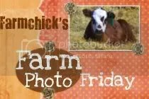 Farmchicks Farm Photo Friday