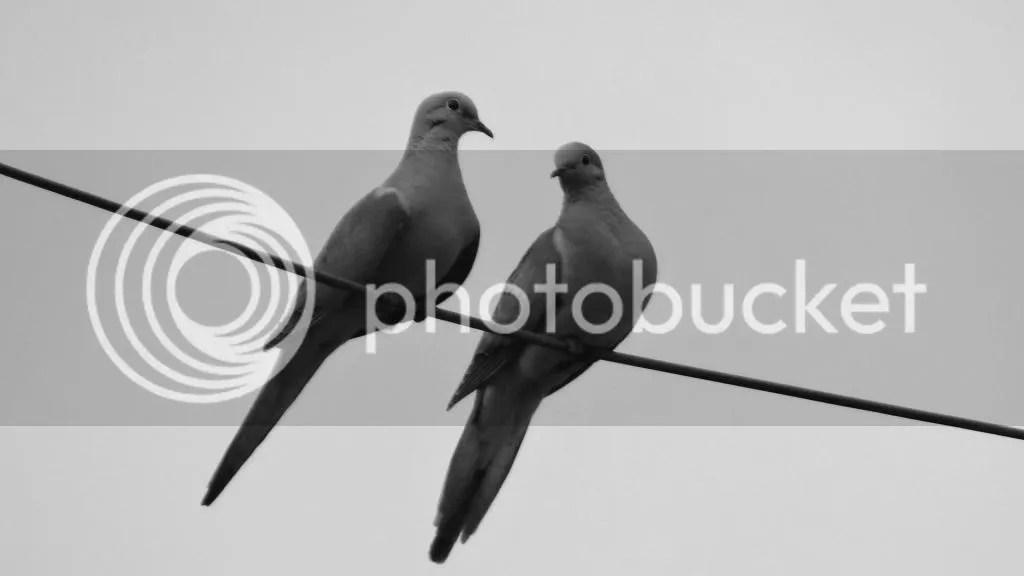 210513  bard bird mrng dv photo DSC07331_zps6963d739.jpg