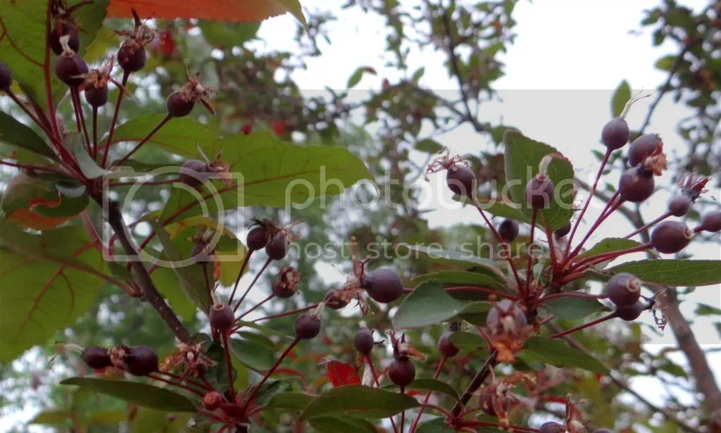 photo DSC07376_zps71117858.jpg