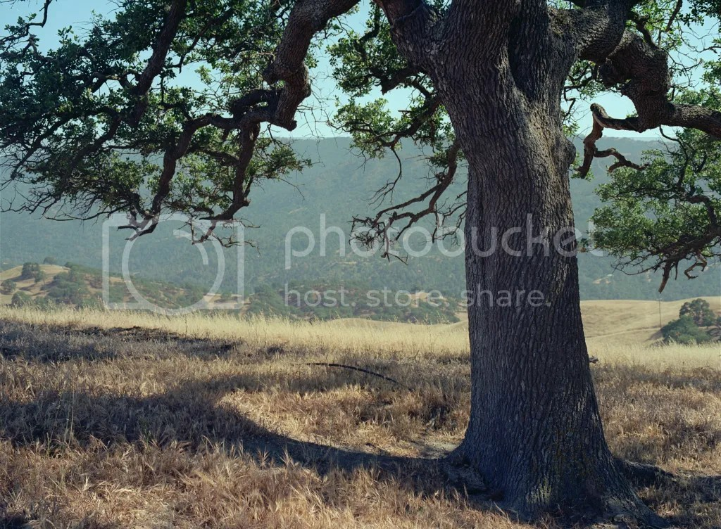 photo BigTree_zps05c1145a.png