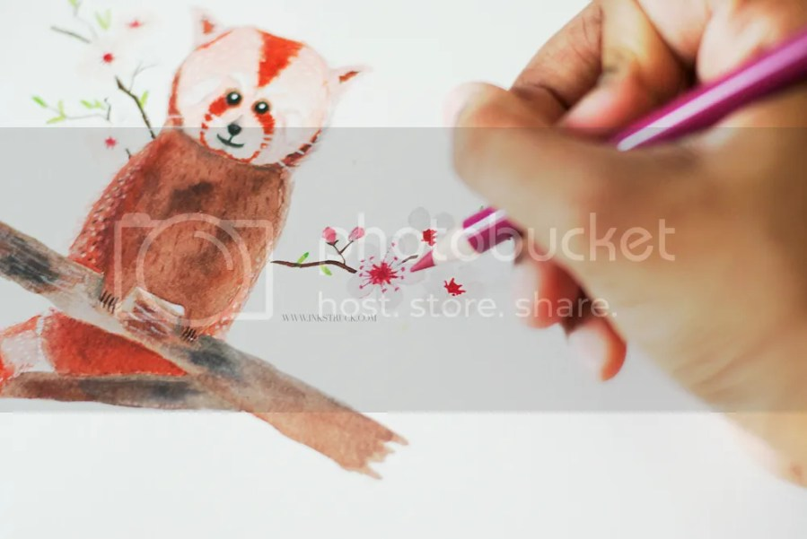 red panda illustration tutorial