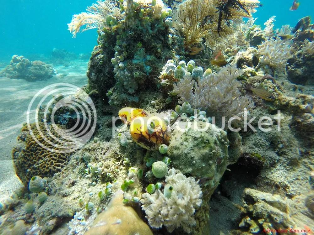 Scuba Diving Anilao