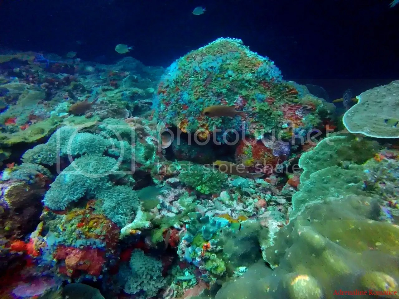 Scuba Diving in Chapel, Apo Island: Finding Love, Beauty ...