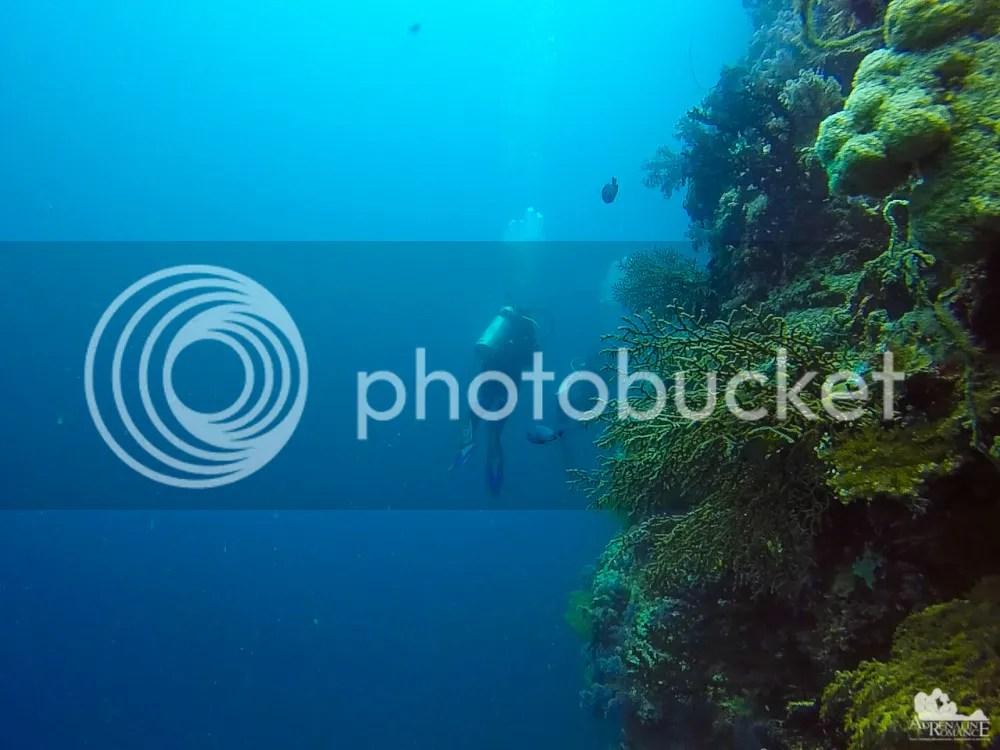 hard corals