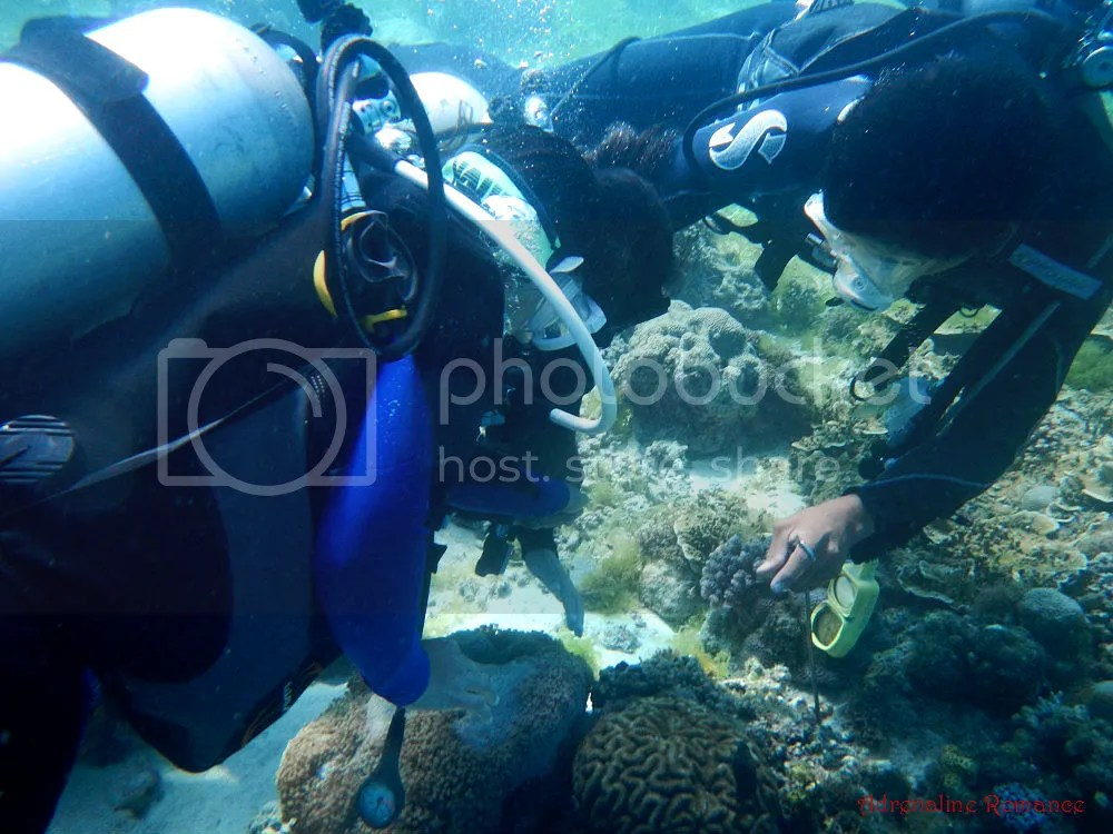 Discover Scuba Diving with Friends