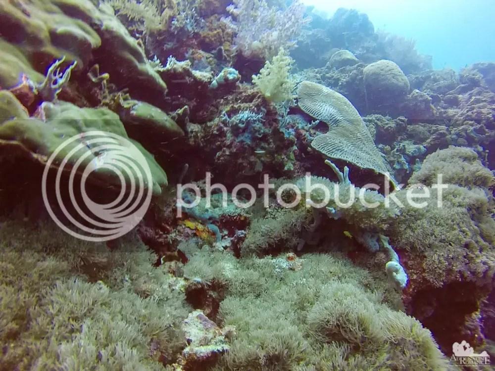 SSan Vicente Marine Sanctuary