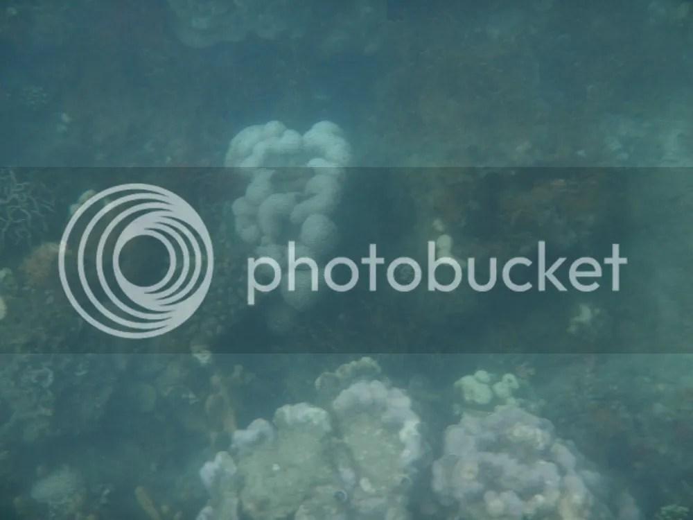 Pambato Reef Honda Bay