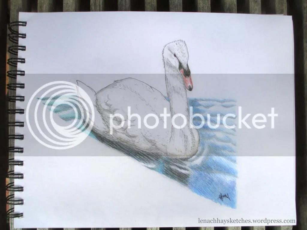Swan 12-12-14 photo Swan12-12-14_zps1a3e7a3c.jpg