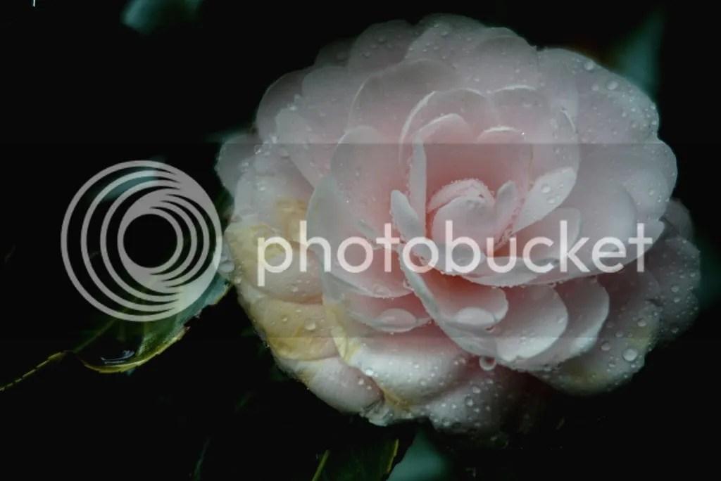 photo eyeemfiltered1421432931977_zps0e174528.jpg