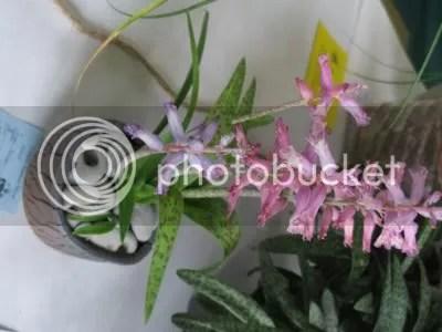 Show Plant H