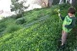 Tiagoflowers.jpg