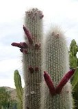 kaktus3_oasys.jpg