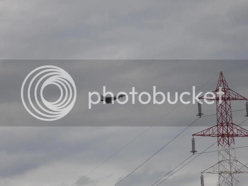 photo DSCN1294_zps213d40f0.jpg