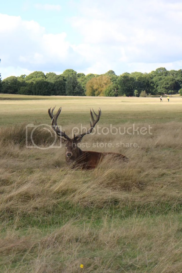 photo Richmond Park October 2016 28_zpsf2g1fwph.jpg