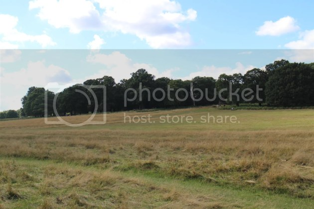 photo Richmond Park October 2016 29_zpsgnce7j88.jpg