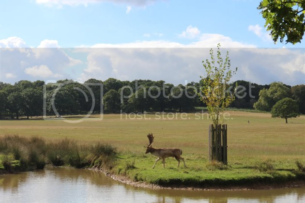 photo Richmond Park October 2016 45_zpszvs9i14e.jpg