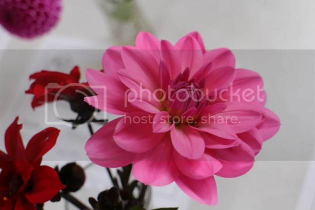 photo 2014-09-13150145_zps6a3c57b6.jpg