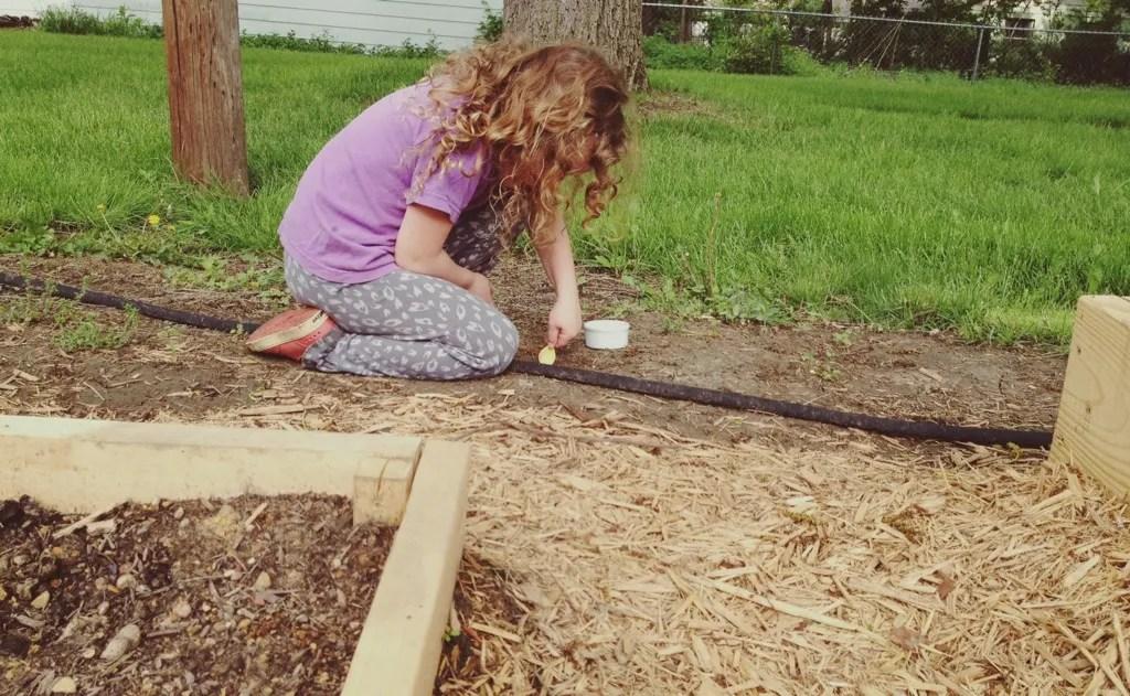 darla planting tree