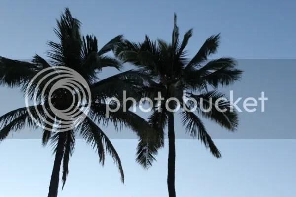 photo IMG_2409_zps95660c96.jpg