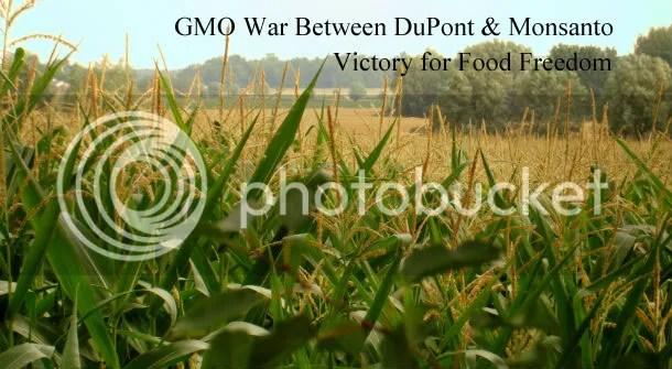 GMO war