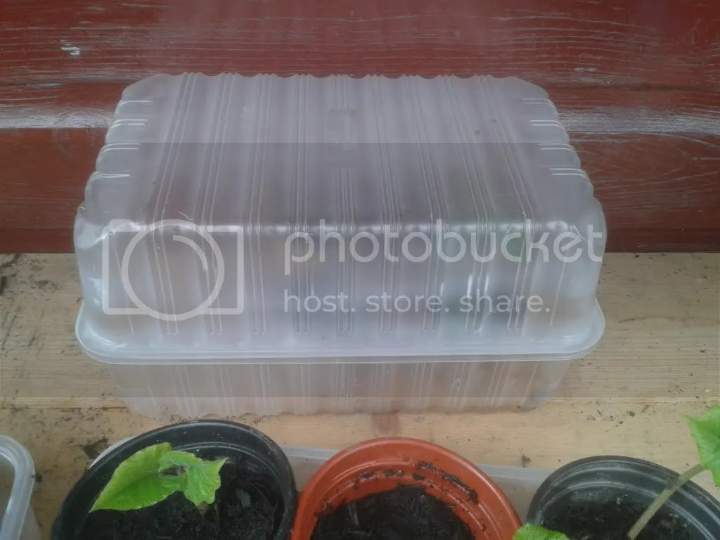 A free little propagator made from supermarket mushroom containers.