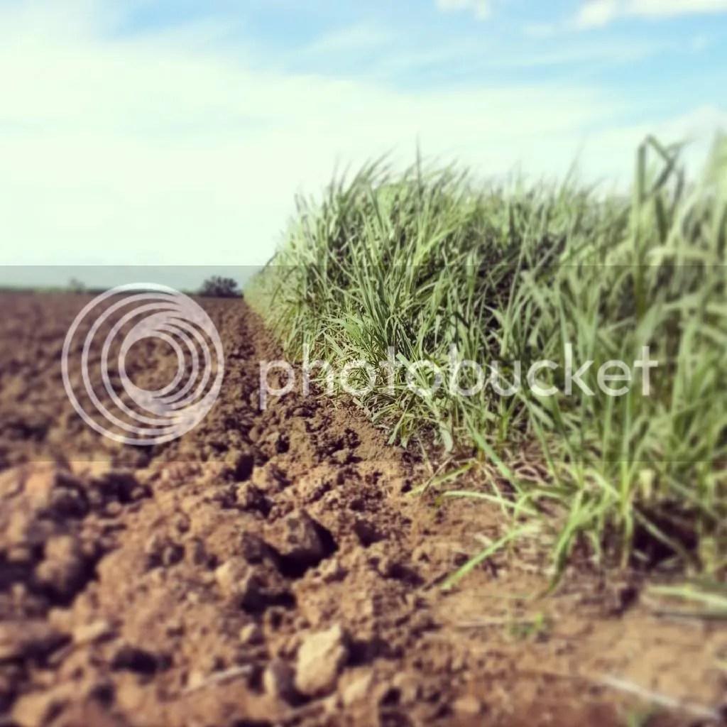 Sugar cane fields photo IMG_20140503_141139_zpspsbv0vsz.jpg