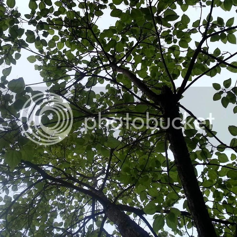 photo 11040918_10153282378406181_4886793089747628847_n_zpsowo68923.jpg