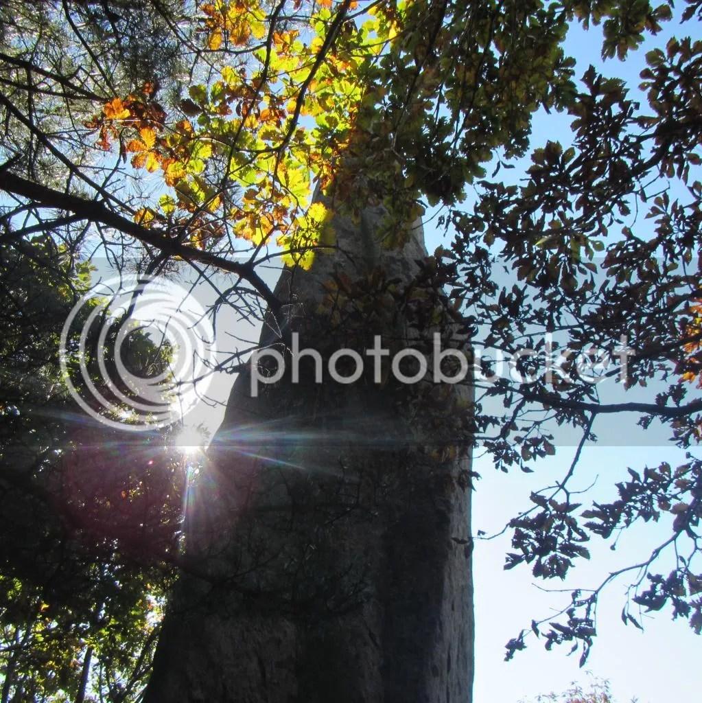 photo IMG_3172_zps28f7a2b6.jpg