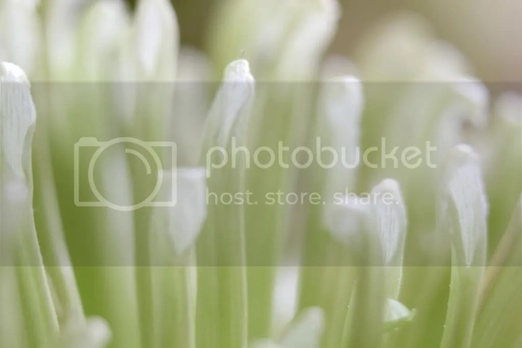 photo IMG_3941_zps60c6d766.jpg