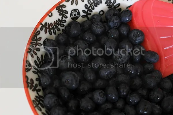 photo blueberry2_zpsa76341d6.jpg