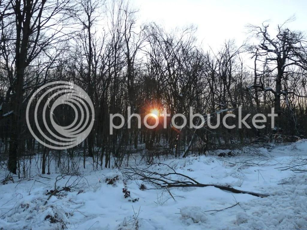 Photo P2880419.jpg