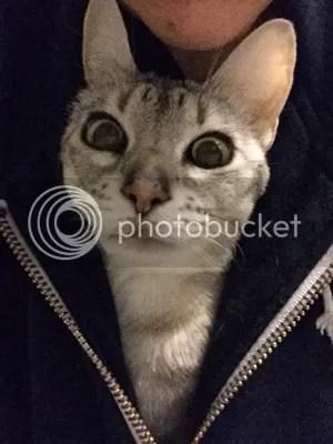 Kenguru myös. En ole järkyttynytkään mistään, vaikka voisi luulla. Kirjassa sanottiin, että kissalla on kasvoissaan 21 toiminnallista yksikköä, joilla tehdään ilmeitä. Koiralla on 16 ja ihmisillä 27. Siksi me kissat ollaan niin ilmeikkäitä. Pulujen ilmeistä ei puhuttu.