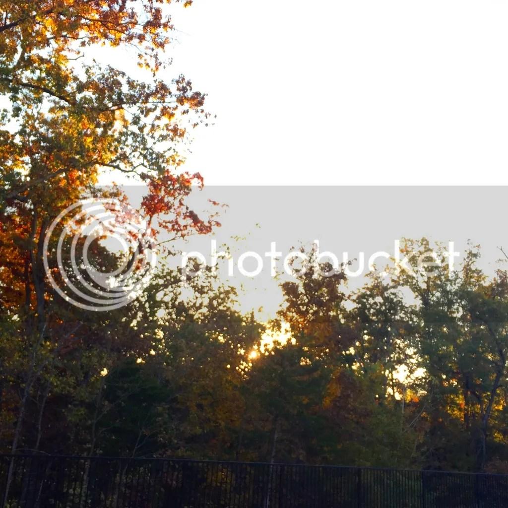 photo 83430D94-F8B3-439B-AE70-D77D69693D24_zpspal0g3r9.jpg