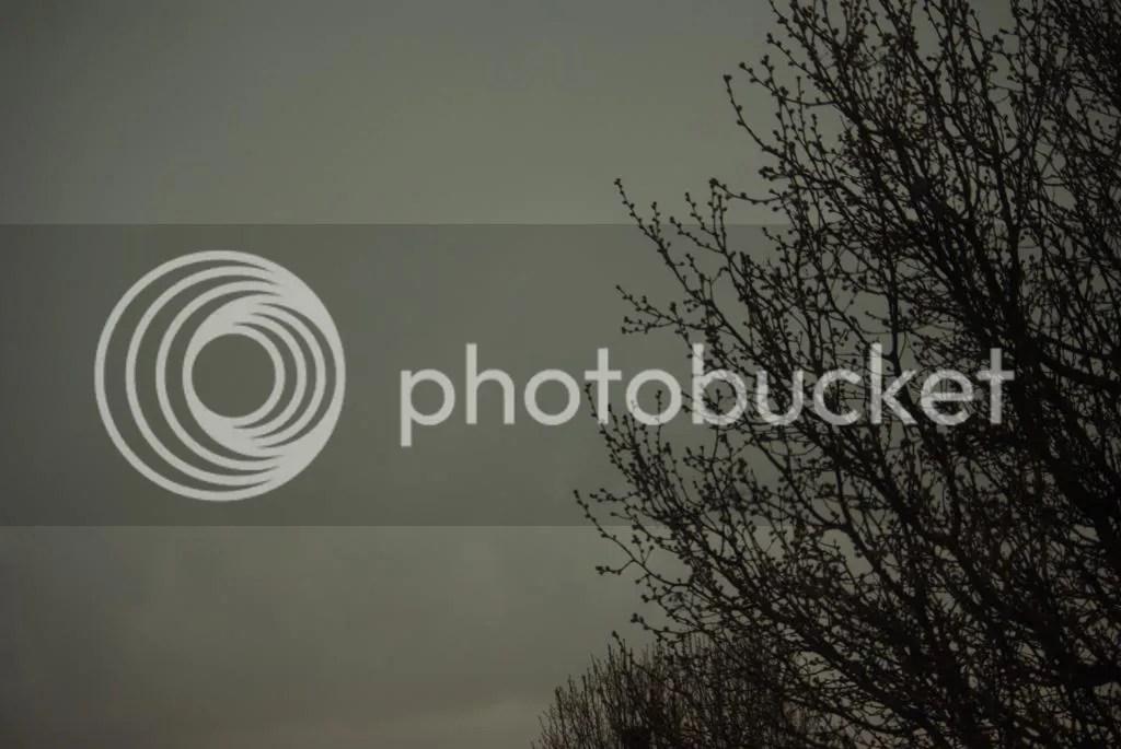 photo IMGP0011_zps12cca73b.jpg
