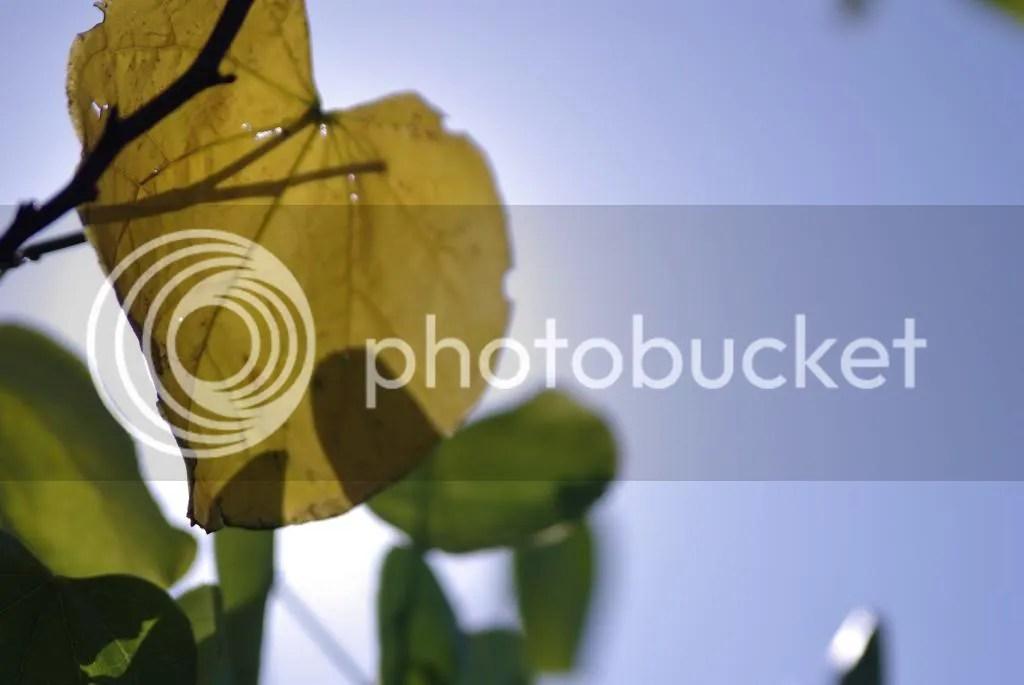 photo IMGP01452_zps304cd3c7.jpg